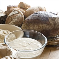 School of Artisan Food Wild Yeasts and Sourdoughs